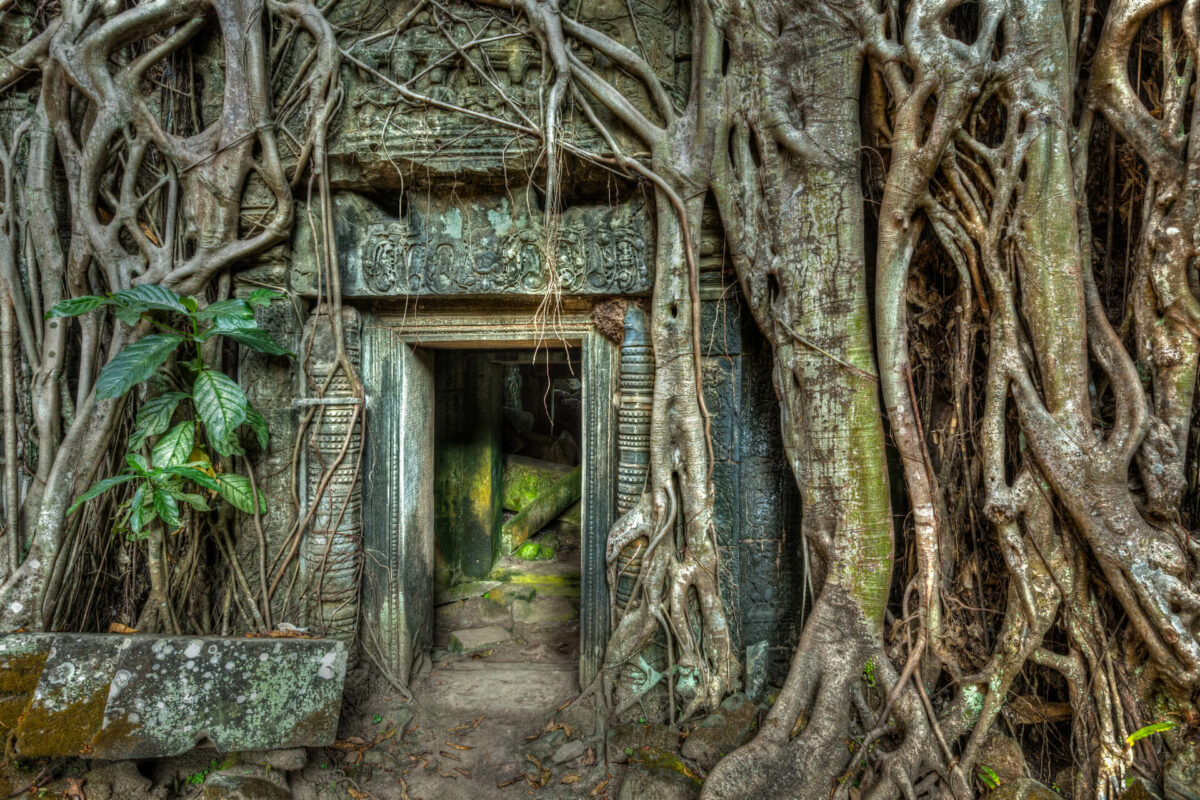 Ancient stone door and tree roots