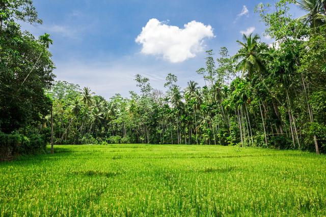 Deep jungle forest